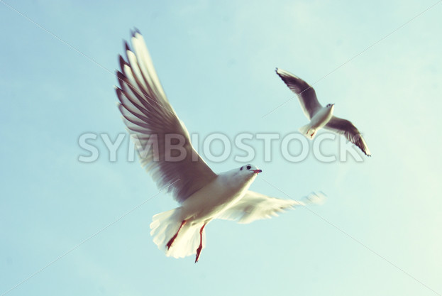 Birds Flying Against the Blue Sky - Symbiostock Express Demo