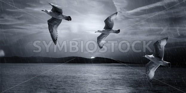 Seagulls Flying Illustration - Symbiostock Express Demo