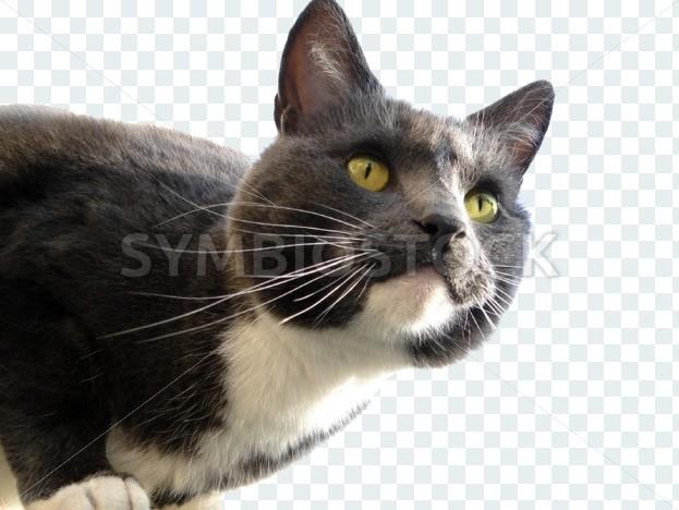 Transparent Cat - Symbiostock Express Demo